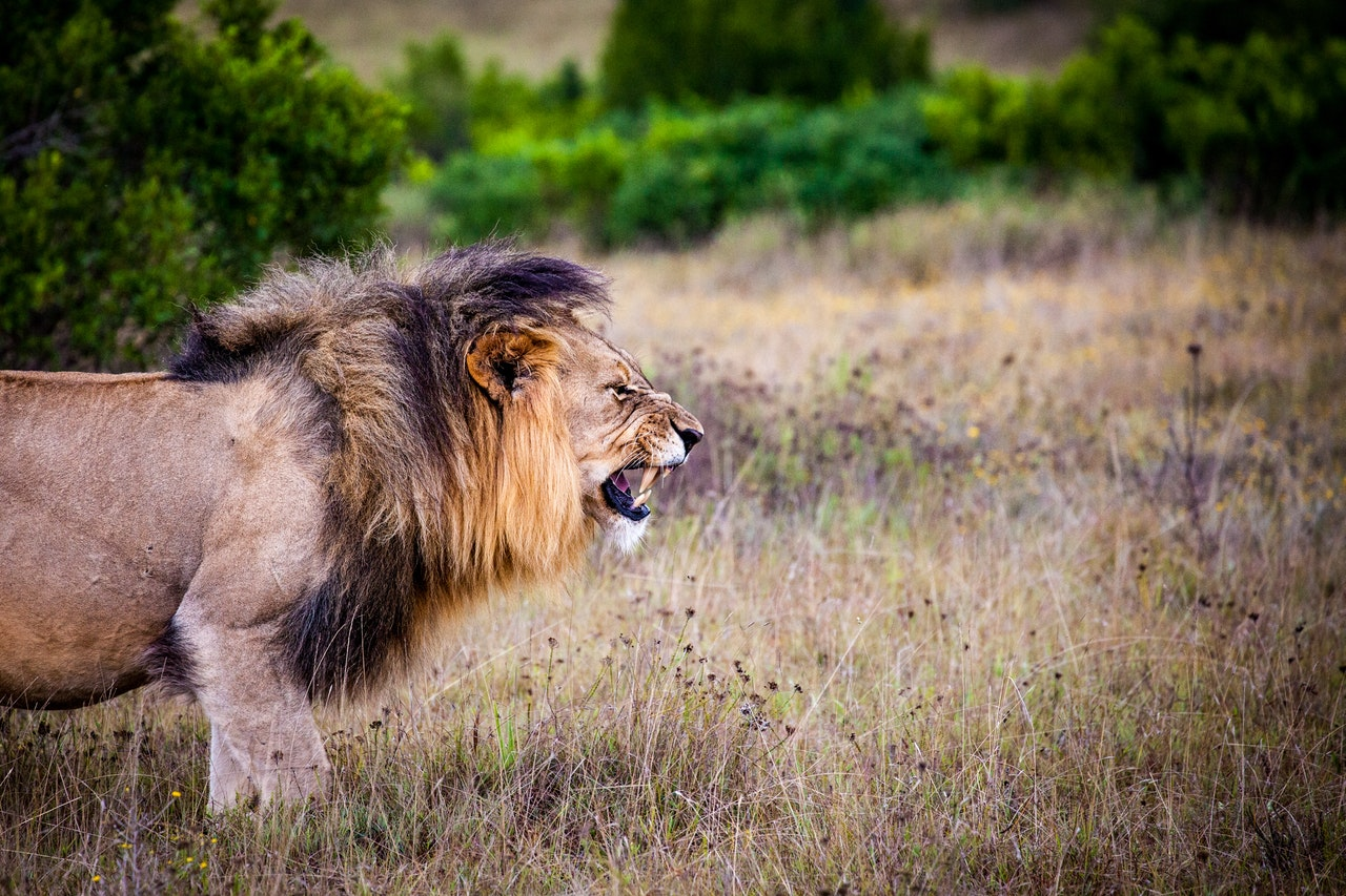 Bold As A Lion – Skipping Stones